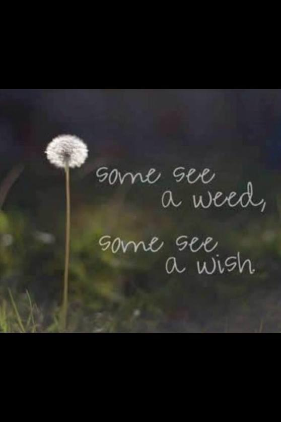 some-see-a-weed